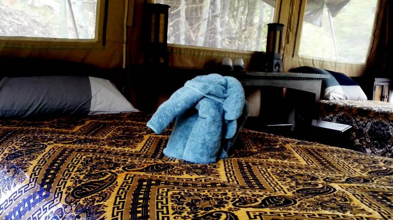 Elephant Special Tours - Luxury Tent 2