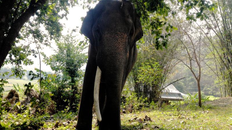 Elephant Special Tours - Luxury Tent 8