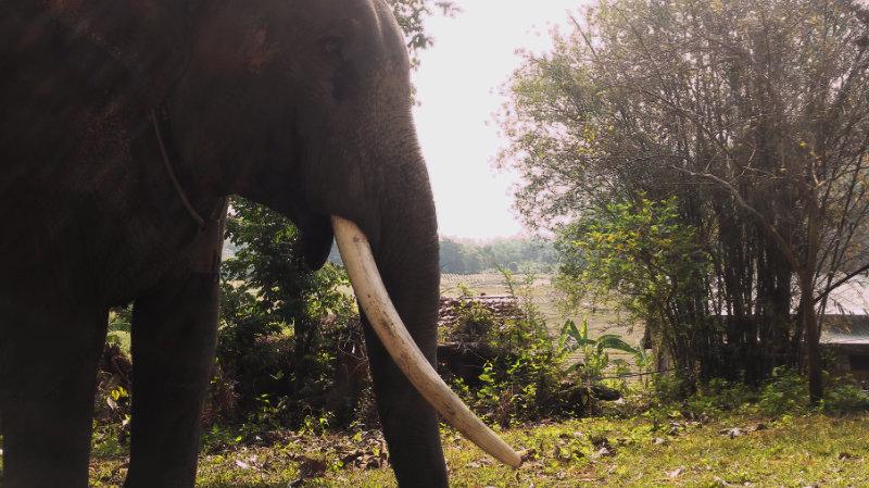 Elephant Special Tours - Luxury Tent 9
