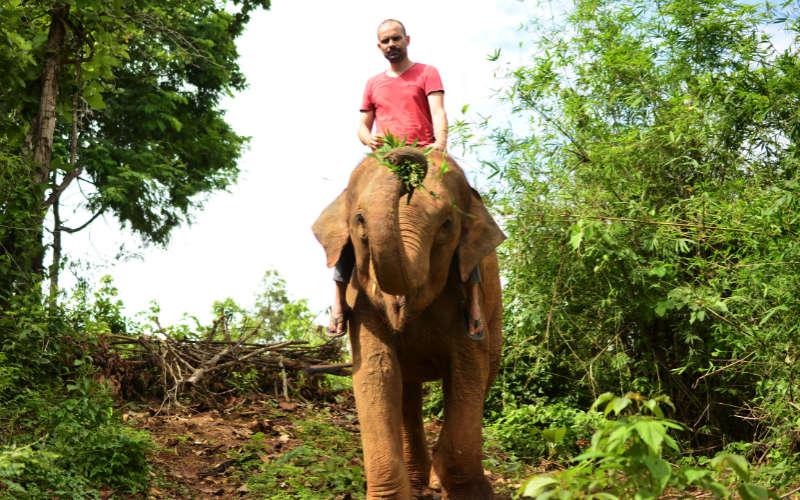 Elephants-bonding6