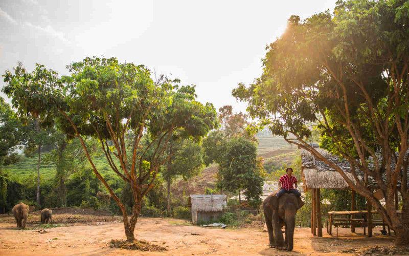 Elefantenreiten Thailand Chiang Mai Mahout