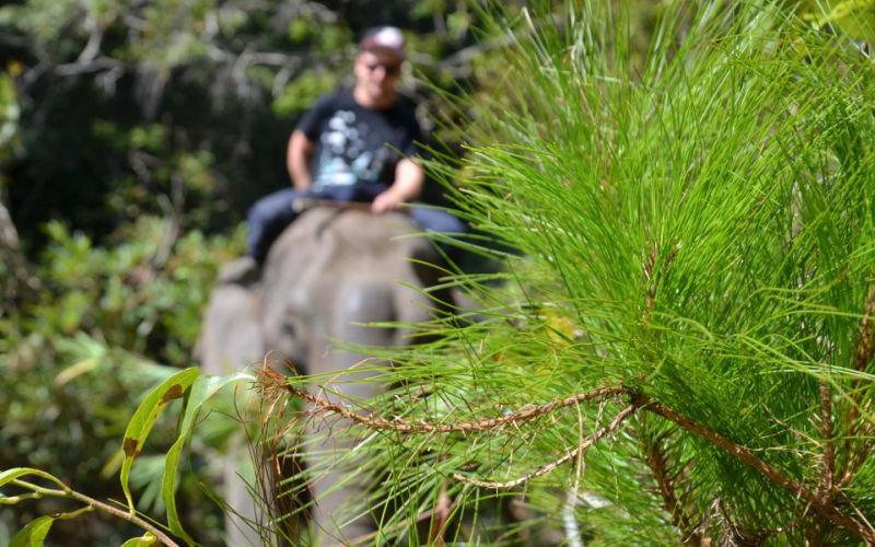 Elefantenreiten Thailand Chiang Mai
