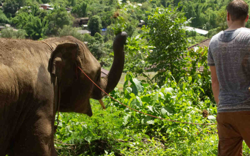 Elefant Thailand Chiang Mai