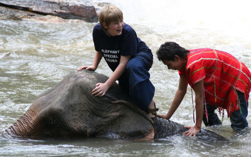 Elephants-handling4