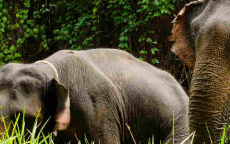 Elephants-jungle2