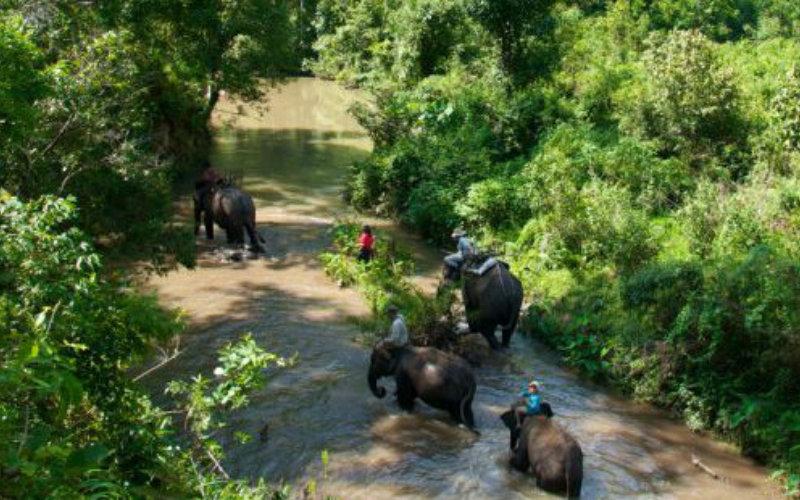 Elephants-jungle3