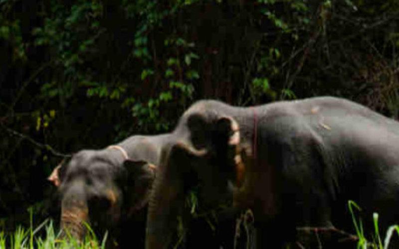 Elephants-jungle4