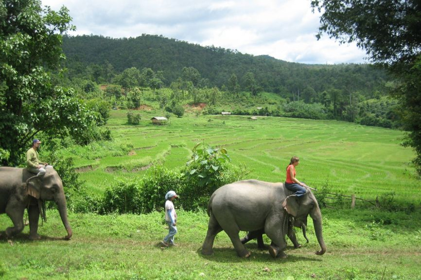 Elephant Riding Chiang Mai Thailand