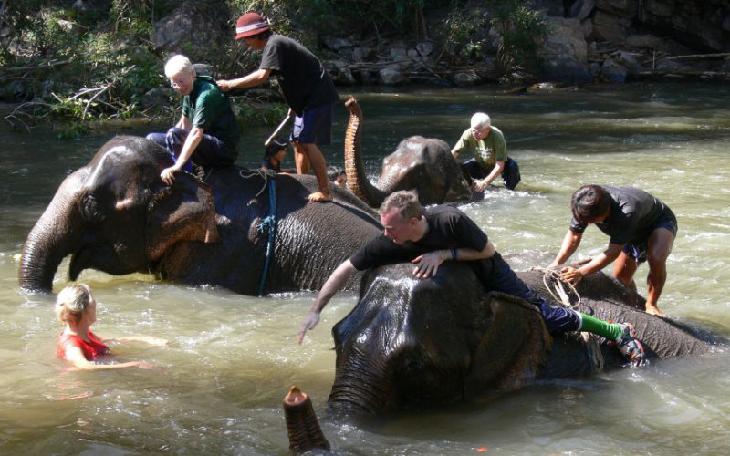 Elephants-trek1