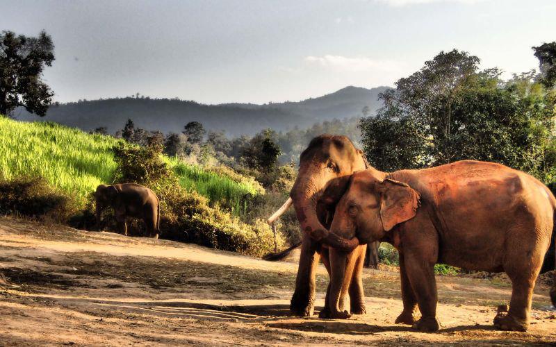 Elefanten Thailand Chiang Mai