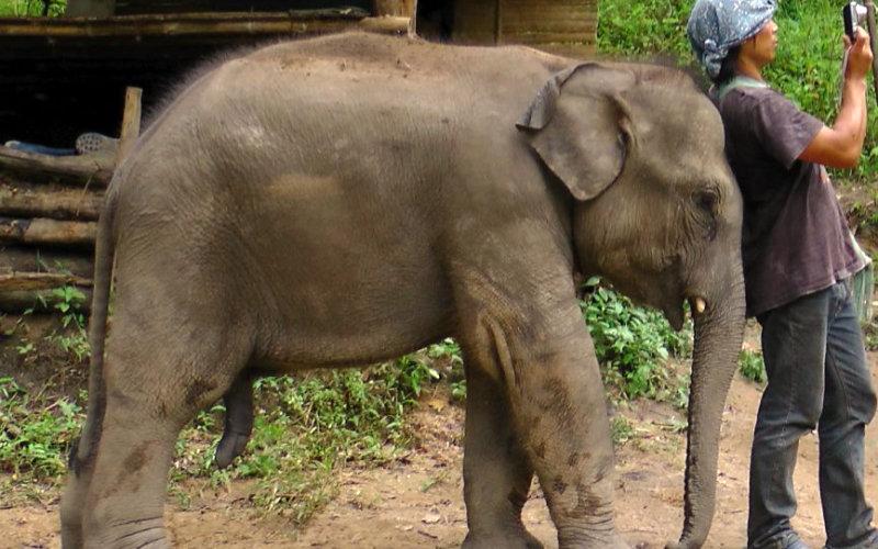 Elephants-trek5