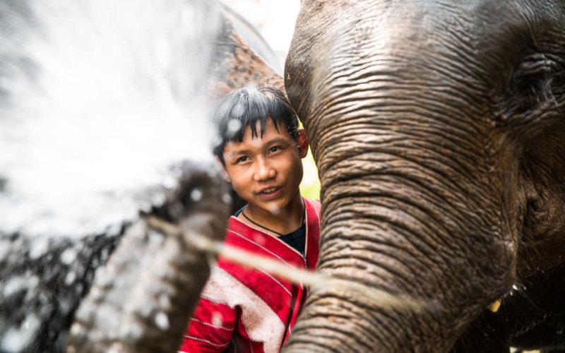 Elephants-up-close1