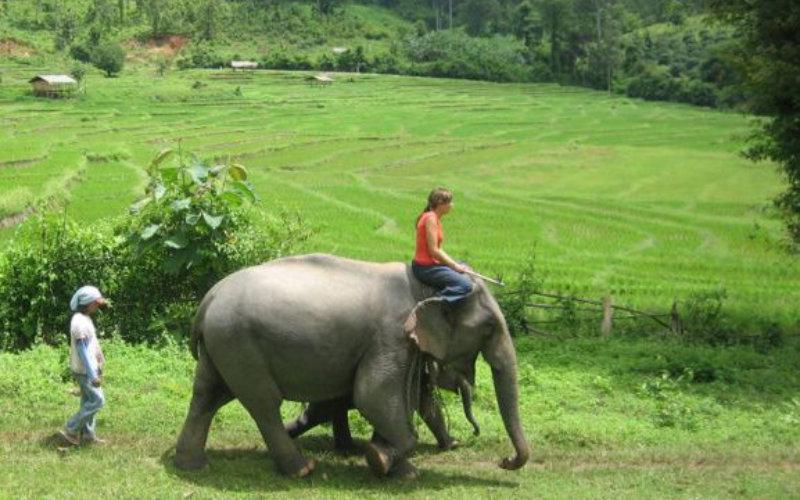 Elephants-up-close4