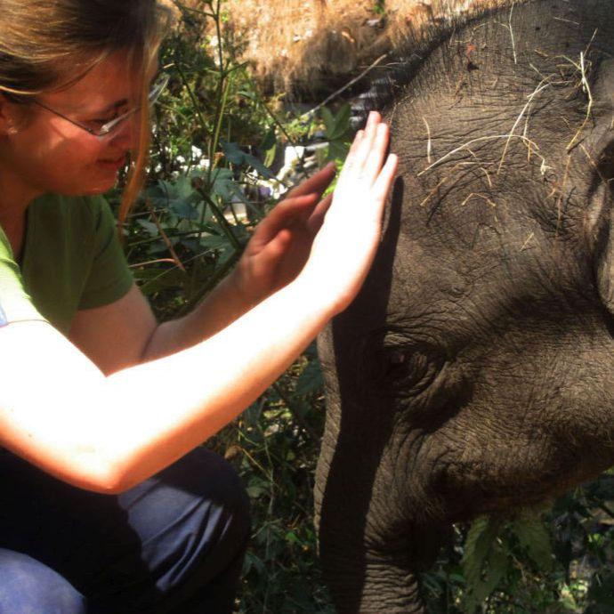 Elefanten Begegnung