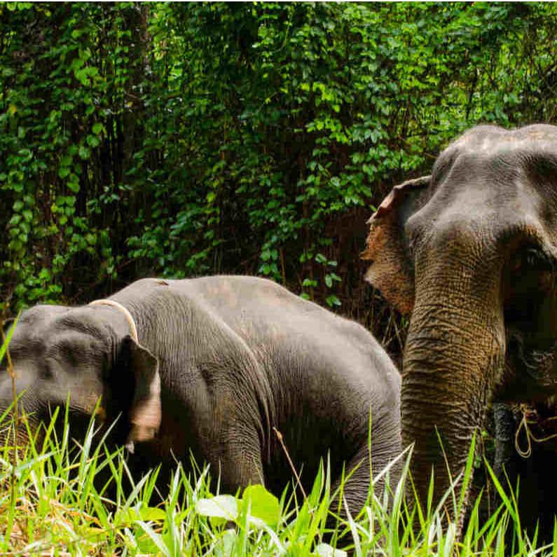 Elefanten Hautnah Tour