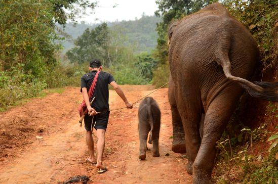 Elefanten Baby Thailand