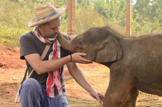 Elefanten Baby Thailand Roger Förster
