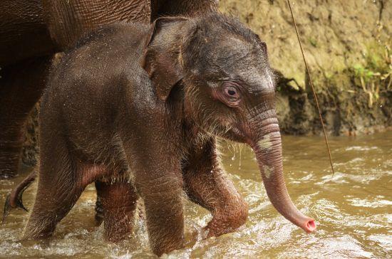 Elefanten Baby Thailand Wasser