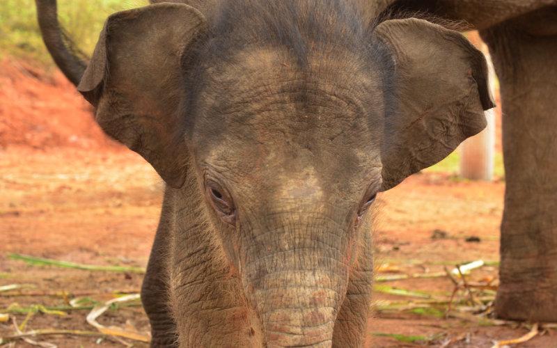 Elephant Special Tours - Elephant Baby - 2