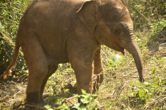 Elephant Special Tours - 2 months old - 1