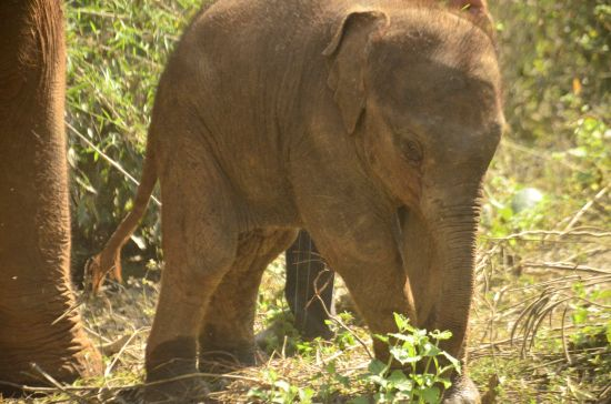 Elephant Special Tours - 2 months old - 2