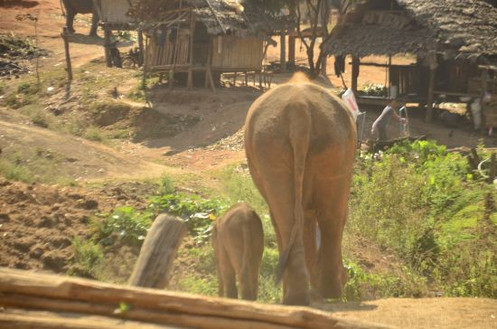 Elephant Special Tours - 2 months old - 3