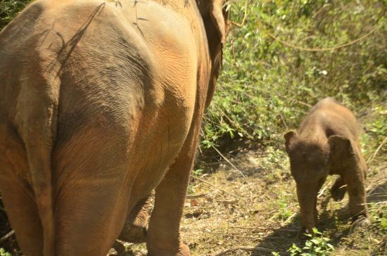 Elephant Special Tours - 2 months old