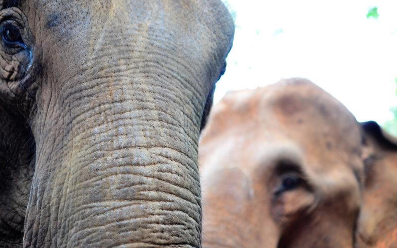 Elephant Special Tours - Luxury Elephant Trip 4