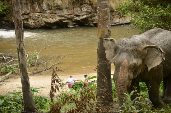 Elefantensafari01