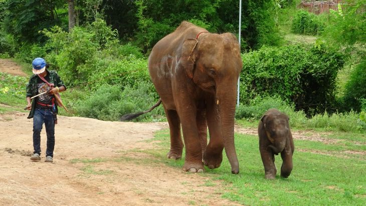 Mama Baby Mahout Thailand Elefanten