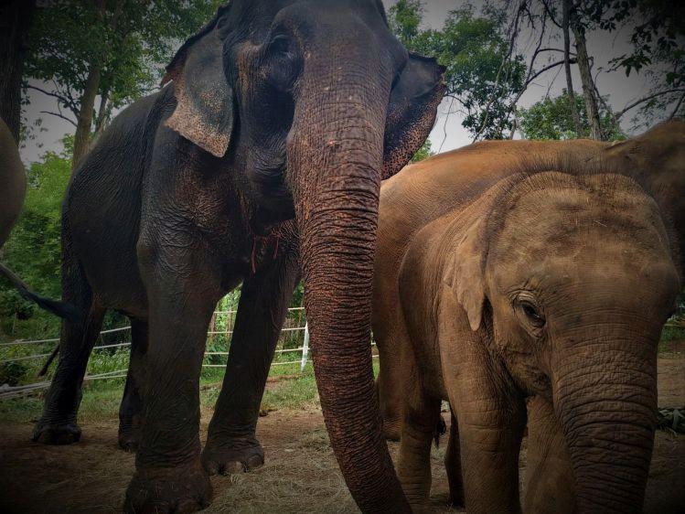 Elephant Special Tours01