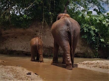Elephant Special Tours02