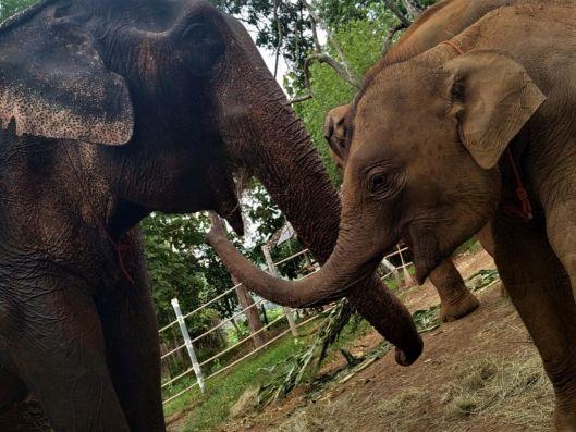 Elephant Special Tours04