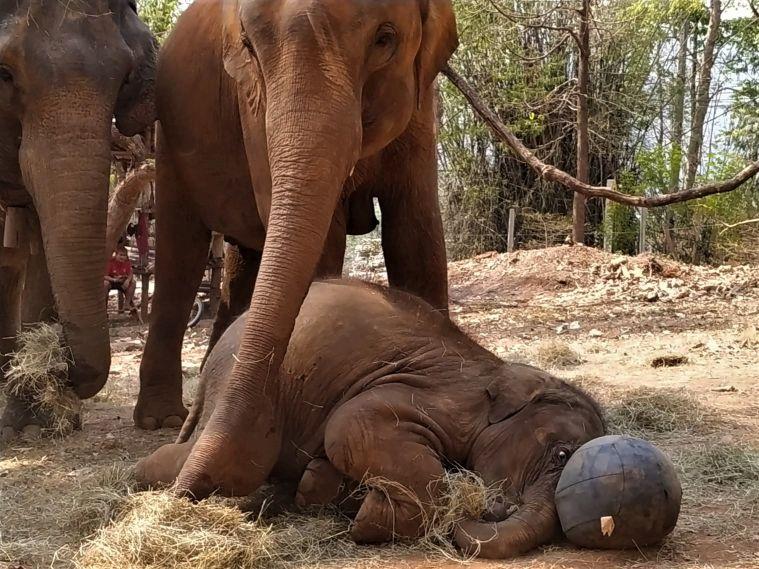 Elephant Special Tours06