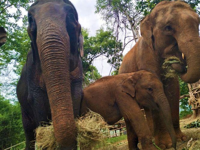 Elephant Special Tours07